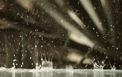 """Rain .. (Queen333"""" ) Tags: trees rain canon is mud saudi arabia l ef f4  24105mm  d450"""