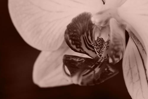 monochrome orchid