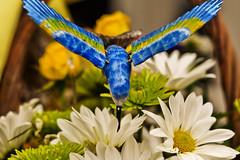 Daisies (ptagolfer) Tags: flowers blue bird daisies colorful pretty hummingbird saturation lillies