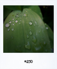 "#Dailypolaroid of 31-5-11 #250 #fb • <a style=""font-size:0.8em;"" href=""http://www.flickr.com/photos/47939785@N05/5793320930/"" target=""_blank"">View on Flickr</a>"