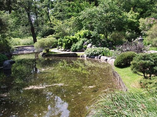 Trädgård 419