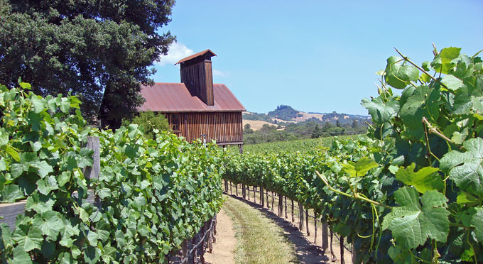 Napa Wine Region