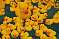 The Duck Pond (Jeff Clow) Tags: yellow ducks rubberducky texasstatefair rubberducks statefairoftexas toyducks jeffrclow