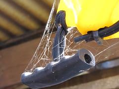 El paso del tiempo!!!! (CronosCross) Tags: spider araña tiempo cordel tela agarradera