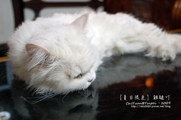 [叮叮]Cat。夏日限定。雞腿叮.JPG