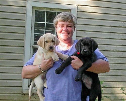 Nancy Kaiser - Lab Pups