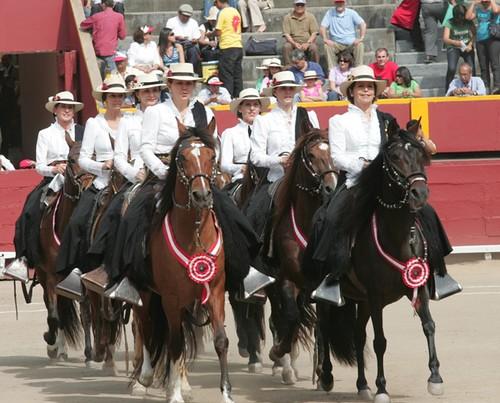 Amazonas sobre caballos peruanos de paso