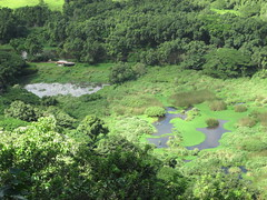 Looking down in the valley (kazakanan) Tags: bigisland waipio