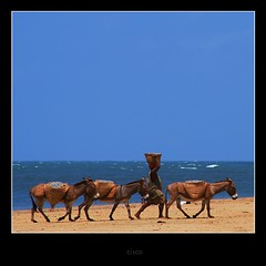 'Life Donkeys' (cisco ) Tags: life sea sky 3 beach three donkeys lamu kenia asini photographia photographia saariysqualitypictures authorsclub settembre2011challengewinnercontest