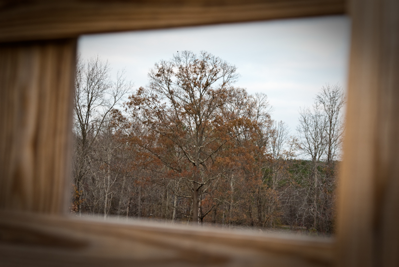 Day 47: Framed Tree