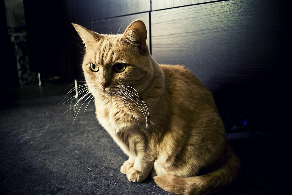 Katten Julia