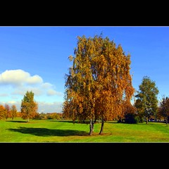 Autumn's shadow (JannaPham) Tags: park autumn red orange green colors yellow canon eos russia moscow 5d kolomenskoye markii    project365  124365  jannapham