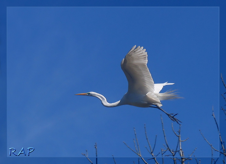 Plumas y más Plumas, Fotos Propias de Aves ~ Top Post!
