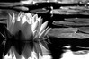 stone flower (nosha) Tags: bw nature beautiful beauty gardens copenhagen garden denmark botanical nikon august f16 pm 2008 botanicalgarden lightroom kobenhavn d300 200mm blackmagic nosha 1160sec nikond300 1160secatf16