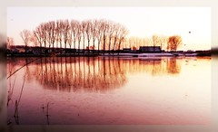 reflections of my life (Adrinne -for a better and peaceful world-) Tags: trees thenetherlands myhometown terneuzen windsandandwater reflectionsofmylife winterinthenetherlands otheensekreek beforesunrise191209