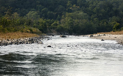 The Ramganga River, Dhikala Region, Corbett national Park, Uttarakhand, India (Mumu24) Tags: wild india nature forest river asia stream wildlife pebbles jungle wildlifephotographer freshwater springwater corbettnationalpark dhikala ramgangariver wildlifephoto cobett chrocodlepool