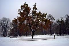 Alone (Sareni) Tags: trees winter sky snow tree colors leaves nikon branches si january slovenia slovenija zima mb maribor 2010 twop sneg d60 nikond60 betnava sareni