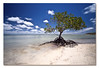 It's already tomorrow here in Australia. ([ Kane ]) Tags: longexposure morning sky tree water clouds photography moving sand time roots australia mangrove shore qld queensland ripples kane australiaday nd400 gledhill sigma1020 kanegledhill wwwhumanhabitscomau kanegledhillphotography