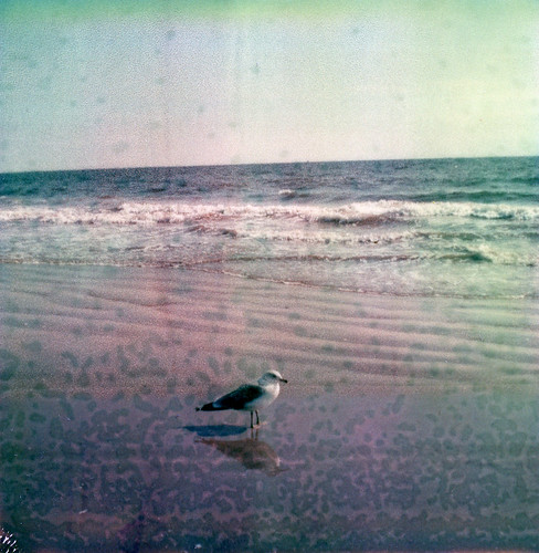 seagull by anniebee.