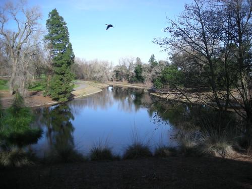 U.C. Davis Arboretum