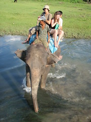 Elephant safari in Chitwan National Park - Nepal