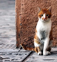 a car hit him (king David Israel) Tags: patagonia cats newyork paris roma berlin london tower argentina animals cat canon landscape nikon kat mark gato 7d katze  gatto melilla koka kedi kass  kissa kttur