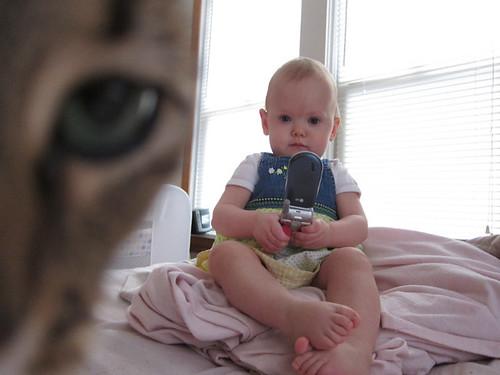 Kitty's eye
