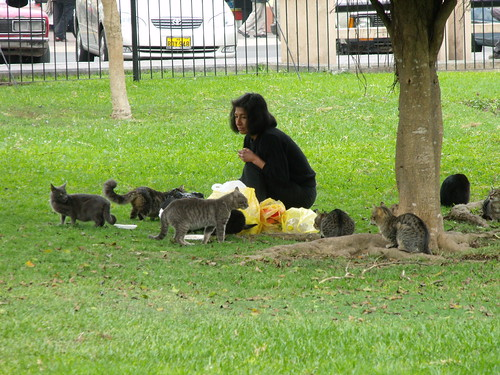 Gatos en el Parque Central de Miraflores (by javi270270)