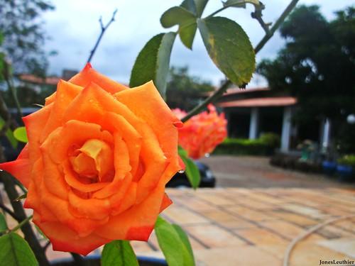 Flor da Vida! - Quinta-Flower - #Explore 3