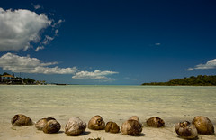Coconuts along the Shore