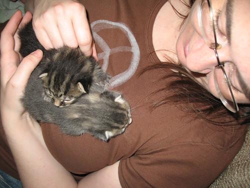 Future new kittens