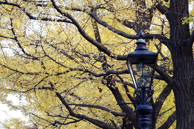 20101127_153217_横浜_山下公園