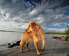 Jack's Dog (Fish as art) Tags: lighting summer dog chien lake animal composition outdoors nikon flash ngc lac yellowknife paulvecseiphotography