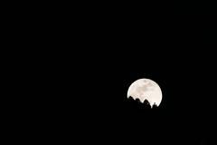 Mondaufgang | Moonrise (stgenner) Tags: mond mondaufgang vollmond einfach silhouette natur fullmoon stefangenner