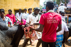Jallikattu Backstage Documentary Series | Alanganallur,Tamilnadu. (vjisin) Tags: india asia tamilnadu culture incredibleindia tamil civilisation outdoor people building light shadow streetphotography indianstreetphotography jallikattu bull indianbulls layers nikon nikond3200 iamnikon documentaryphotography documentary vaadivasal red yellow