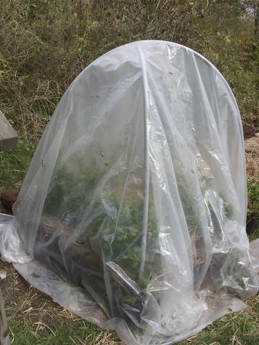 protected herb garden