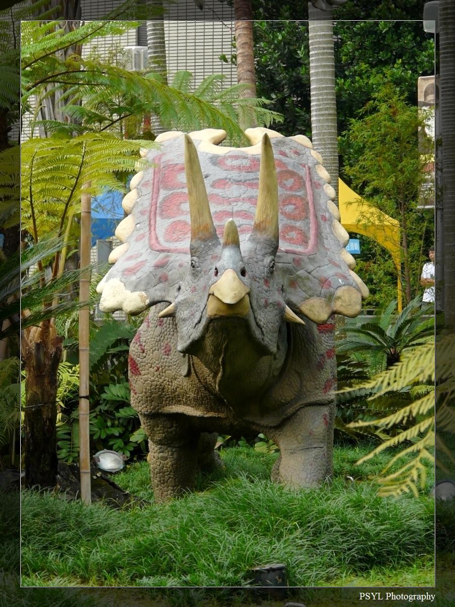 Triceratops spp.