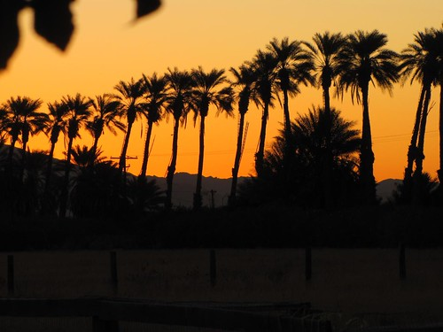 Sunrise Date Palms