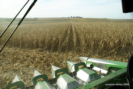 11 counting rows
