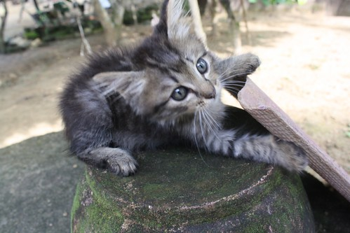 wallpaper kucing comel. aksi-aksi comel yang boleh