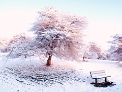 (dlemieux) Tags: morning pink blue winter light white snow tree nature beautiful boston sunrise wow bench landscape scenery december snowy massachusetts sunday dlemieux newengland arboretum scene blanket overexposed highkey untouched 2009 arnoldarboretum roslindale