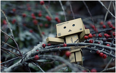 Danbo in bush (jakub_p) Tags: winter red canon eos 50mm bush 18 zima danbo bobule 400d danboard