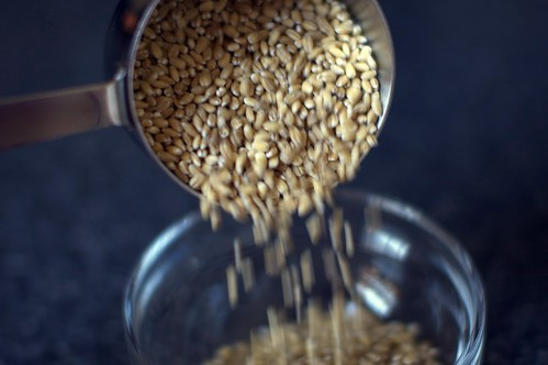 pearled barley