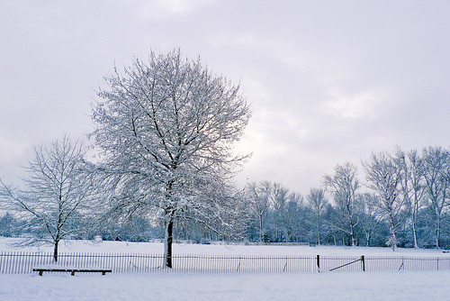 Wintery trees in Christchurch Meadows  *1*