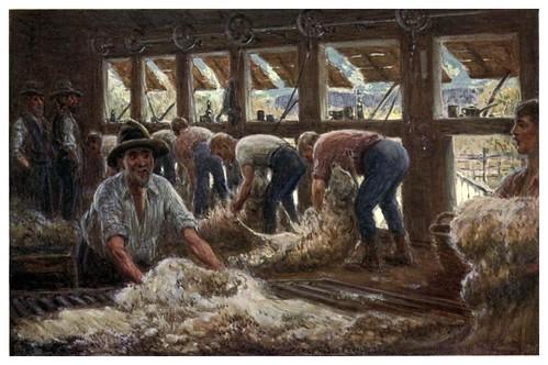 020-Esquilando ovejas-Australia (1910)-Percy F. Spence