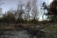 Meijendell (Niquitin) Tags: trees winter netherlands bomen nikon mud branches dunes nederland duinen modder takken niquitin d80 meijendell dickbruinsma boismeurtrie