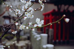 20100214_24_05   (peter-rabbit) Tags: film japan analog nikon shrine asia inari f100 nikonf100 fujifilm osaka realaace  tenjin reala kitaku  fujicolor    silverfast   8800f  osakacity  osakatemmangushrine canoscan8800f tenjinsan rawtherapee  osakatenmangushrine    36 takenin2010