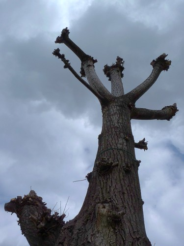 tree horn 2