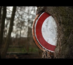 a tree swallowing a road sign - nature is so s...