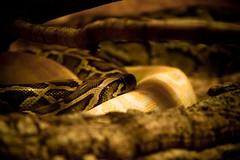 Schlangenkuscheln
